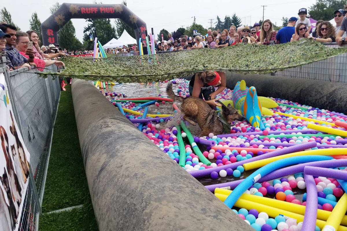 Playful pooches take over Bullen Park for free event Saturday, Sunday