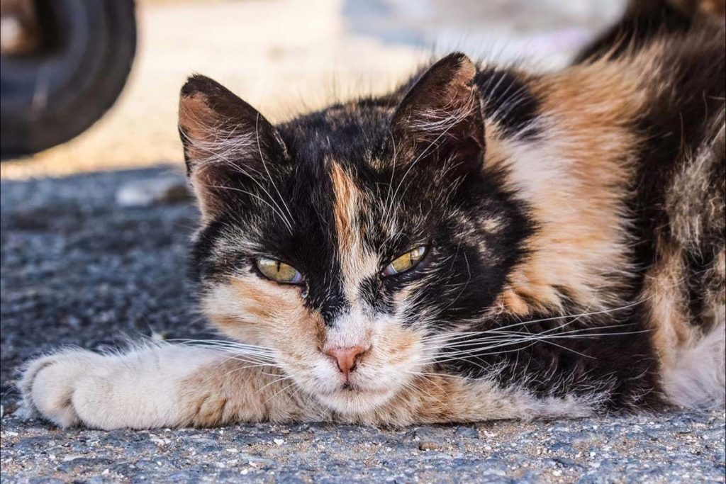 Feral cat rescue group looking for support - Saanich News