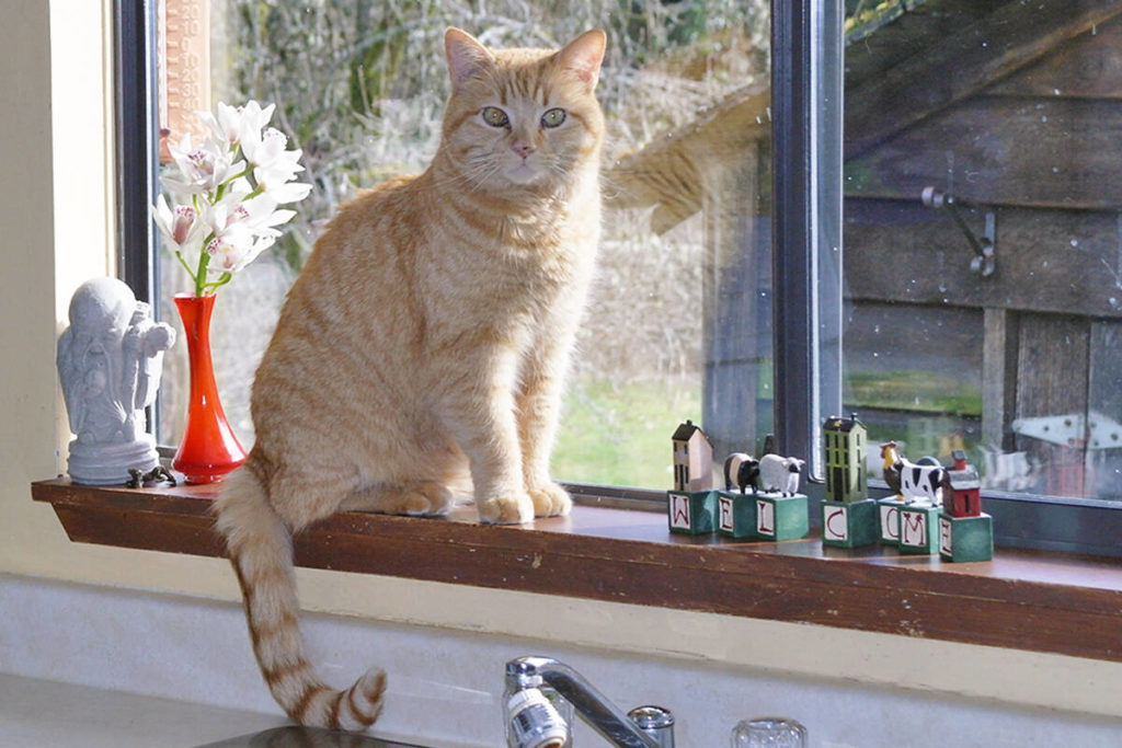 Nanaimo's 'cat control' animal responsibility bylaw now official - Saanich News